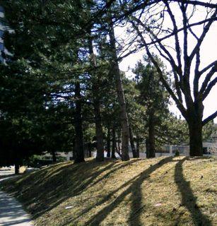 Sun through trees2