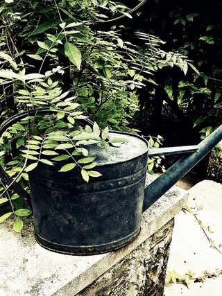Magpie watering can