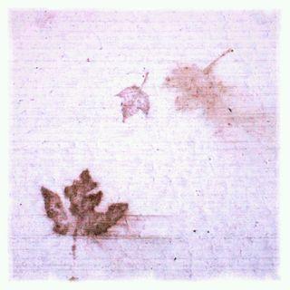 Ghost leaf 1