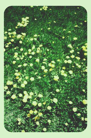 Dandelions stylized